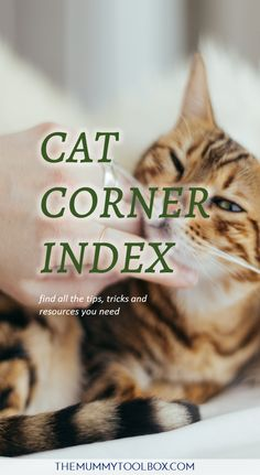 Welcome to the cat corner index, where you will find all posts relating to cats - guest posts and otherwise that have been posts, in a handy clickable list. Toyger Cat, Asian Leopard Cat, Ocicat, Cat Toilet Training, Spotted Cat, Oriental Cat, Cat Sitter, American Shorthair, Cat Recipes