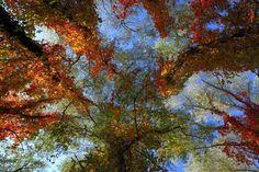 TIME TO DREAM. Blue Sky, Trees, Autumn, Fall, Leaves, Sun, Light, DreamColours, Dreamscape, Pastel, Love, Canvas Art, Home Decor, Art Print.