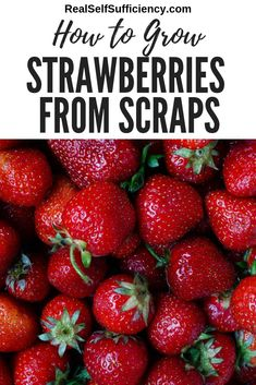 growing strawberries in containers Learn how to grow strawberries from scraps and how to ensure you have a never-ending supply of new plants, year after year. Strawberry Seed, Strawberry Planters, Strawberry Garden, Fruit Garden, Raspberry Plants, Veg Garden, Garden Fun, Edible Garden, Vegetable Gardening