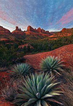 Coconino National Forest, Arizona, United States.