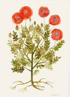 """Poppies"" Original Watercolor and Ink Illustration by Michelle Tavares"