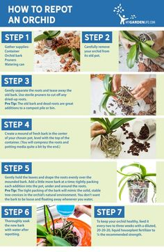 Growing Orchids Indoors: Tips On Care Of Orchid Plants Indoors Indoor orchid care is not difficult, learn how to enjoy these beauties year round. [LEARN MORE] Indoor Orchid Care, Orchid Plant Care, Indoor Orchids, Orchids Garden, Garden Plants, Indoor Plants, House Plants, Indoor Herbs, Veg Garden