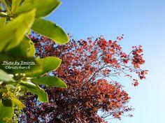 秋色 / autumn leaves in Christchurch, New Zealand