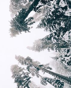 """Happy Winter Solstice - May your days be merry and bright. """"To me winter in the Cascades is a perfectly silent symphony cloaked in chaos.""""  of a snowy wonderland by adventurer extraordinaire @ashleelangholz. #TrekLightGear"""