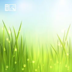Summer Grass Background. Vector illustration, eps10, editable. vector art illustration