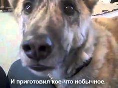 Собака и хозяин разговаривают о еде ))) ваще жесть