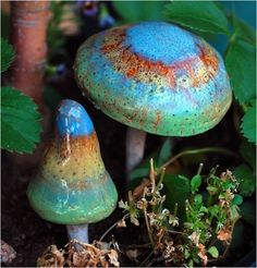 Beautifully colored mushrooms. ARE THESE REAL?