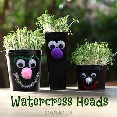 Cute and fun way kids can make little face pots and grow their own watercress hair. ~ Danya Banya