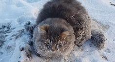 В Златоусте спасли примерзшего ко льду кота