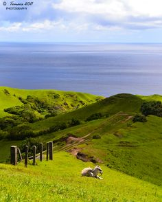 "Rolling Hills, Batanes, Philippines..""To my mind, the greatest reward and luxury of travel is to be able to experience everyday things as if for the first time, to be in a position in which almost nothing is so familiar it is taken for granted."" ~ Bill Bryson"