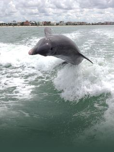 Fort Myers Beach Dolphin & Sunset Boat Tours, Cruises near Naples, Bonita Springs, Sanibel & Cape Coral