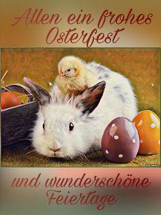 Kindergarten, Rabbit, Easter, Seasons, Animals, Happy, Happy Easter, Sweets, Pictures