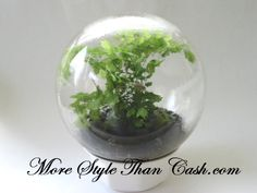 Beautiful Witch's Ball Terrarium, easy to make when you know the secret.