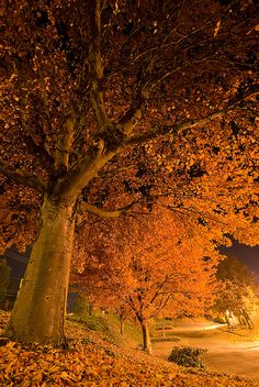 Falling into the night..., via Flickr.