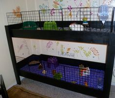 This is our new furniture style cage. Two levels, not connected. Diy Guinea Pig Cage, Guinea Pig House, Cute Guinea Pigs, Guinea Pig Care, Guinnie Pig, Thunderbolt And Lightfoot, Pig Habitat, Pig Ideas, Rabbit Ideas