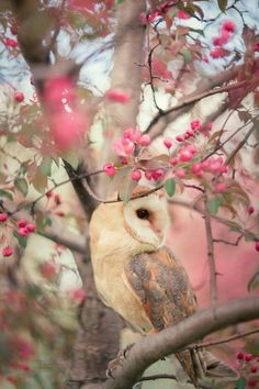 Image result for barn owl in blossoms