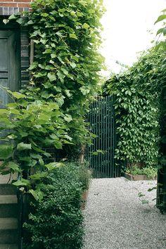 VILLA VÅRGATAN: trädgård
