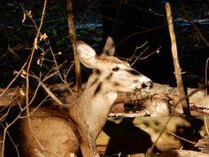 Kangaroo, Goats, Ohio, Deer, Animals, Baby Bjorn, Columbus Ohio, Animales, Animaux
