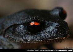 Black Tree Frog- I haven't been able to verify that this is real or find a species name