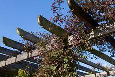 list of suitable pergola plants Pergola Carport, Pergola Swing, Pergola With Roof, Backyard Pergola, Pergola Plans, Pergola Kits, Pergola Ideas, Corner Pergola, Patio Ideas