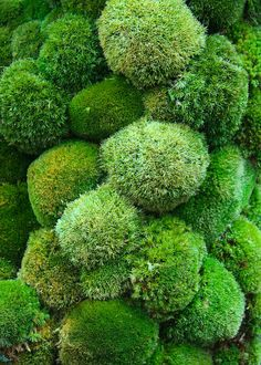 Button mosses,Paradise on Earth by Kazuyuki Ishihara, Chelsea 2014
