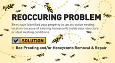 Solution For A Reoccuring Bee Infestation Problem.