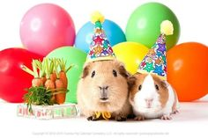 Happy Birthday wishes from the guinea pigs! Happy Birthday Animals, Pig Birthday, Animal Birthday, Happy Birthday Wishes, Birthday Greetings, Birthday Parties, Baby Guinea Pigs, Guinea Pig Care, Baby Pigs