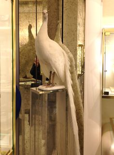 Octavius our peacock watching over the Kara Ross Boutique at 655 Madison Avenue.