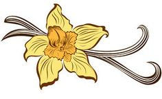 Vanilla flower and vanilla pods-- Logo