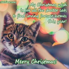 Here are 15 funny, heartwarming, and share-worthy cat Christmas cards that you can send to the people who are close to you this holiday season. Merry Christmas! Cat Christmas Cards, Christmas Ecards, Christmas Wishes, Merry Christmas, Picture Credit, E Cards, Animal Quotes, Christmas Pictures, Kittens
