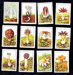 Fungi Mushrooms Toadstools 1950 Nestle Poster Stamp Cards Set Champignons