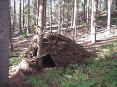build a shelter