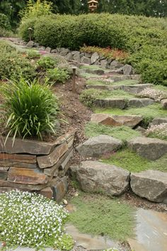 Natural stone steps with creeping thyme ground cover growing in between.