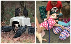 Jarring Photo Of Pit Bull Surrounded By Vultures Became Her Ticket To Freedom Rescue Dogs, Animal Rescue, Miracle Stories, Vulture, Pit Bull, Ticket, Funny Animals, Dog Cat, Freedom