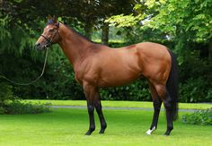 Zoffany is a 8 year old bay Thoroughbred stallion who stands at 16.0hh.