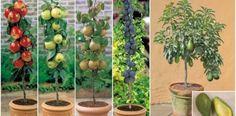 Sabia que pode cultivar fruta sem ter um jardim?   Receitas BR - Dicas de Culinária e Receitas Deliciosas