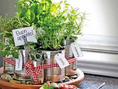 herb garden, kitchen countertops, herbs garden, countertop herb