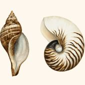 Shell Triptych - Trowbridge Gallery