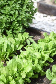 5 Reasons You Should Start a Garden This Summer   http://timelesstasteblog.com  #gardening #timelesstaste #tips