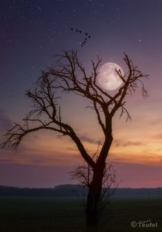 Stunning moon photography: full moon rising over a tree top, can't tell whether the sun is rising or setting. Moon Photos, Moon Pictures, Nature Pictures, Beautiful Pictures, Moon Dance, Shoot The Moon, Moon Photography, Moon Magic, Moon Rise