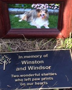 Memorial Tree Photos and Treeternity photo gallery Memory Tree, Photo Tree, Sheltie, Photo Galleries, Memories, Pets, Gallery, Beautiful, Remember This