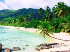 palmeras imágenes, playa wallpapers, persona vector, fotos piedras, costa, centro turístico de la isla, fondos, imágenes, mater