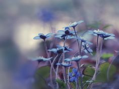 blue dream by Visions_by_Dany on 500px
