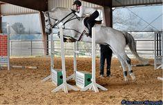 Ride Every Stride Cute Horses, Pretty Horses, Horse Love, Beautiful Horses, Show Jumping Horses, Show Horses, Hunter Horse, Horse Wallpaper, Horse Ears