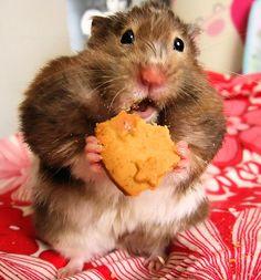 Hamster.   (KO) Just a little bit chubby. Adorable.