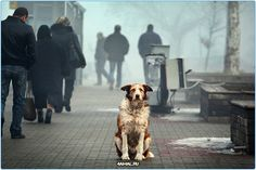 #Россия #собаки #собака  Бездомные собаки  #факты #интересно #животные #бездомные #потеряшки #приюты #russia #dogs #dogs #animals #animal #fact #find #found #lovedogs #instadog