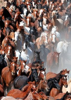 Great American Horse Drive, Sombero Ranch, Craig, Colorado. Michael Huggan, photographer.  Did you know that you can participate yourself in the Sombrero horse drive?  It is an annual event, and has been a tradition for over 40 years as they move their herd each spring. You can join other riders in this unique experience in driving one of the largest horse herds in the state over 60 miles of open Colorado range. Click the photo for more information on this great event!
