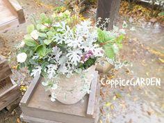 ❄️ 寄せ植えは、季節の訪れを 教えてくれます。 #CoppiceGARDEN #nasu_town #那須 #寄せ植え #ヤブコウジ #シロタエギク #ディコンドラ #グリーンアイス #冬 #冬の訪れ #ガーデン #garden