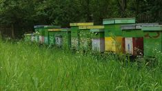 Tristuț cu mierea anul ăsta Bees, Park