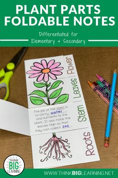 Plant Parts Foldable Notes Diagram and Functions Sort Activity Autism Activities, Sorting Activities, Science Activities, Science Projects, Fun Worksheets, School Worksheets, Science Resources, Learning Resources, Science Classroom